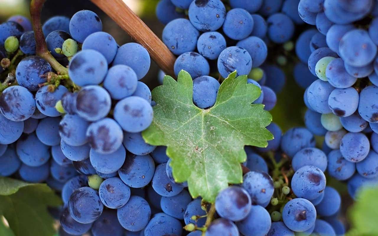 most-beautiful-grape-wallpaper